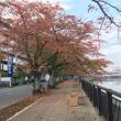 川沿いの秋