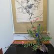 お弟子さんが生けたぼけの花 と 私が家で生け替えたぼけの花