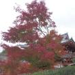京都の紅葉を満喫