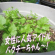 安い袋麺DE究極まで盛り上げられるか、ラ王~さんに協力担担麺(自然の恵みちゃん坦々麺)