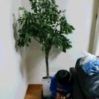 2574☆しめ縄作り&クリスマスツリーの飾り付け☆