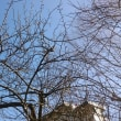 1月12日(金)のつぶやき★「梅は咲いたか、桜🌸はまだかいな!」去年の昨日は梅一輪咲いていたが今年はケヤキとまだ同じ、下の草むらの水仙が咲き始めた!ワンチャンの美容体操笑える!★