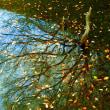 11月13日 落葉晩秋の堤
