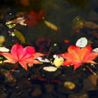 百合が原公園日本庭園池