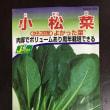 3種の野菜がゆっくりと発芽中 (⌒-⌒)