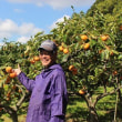 掛川の次朗柿