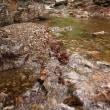 緑濃い渓流
