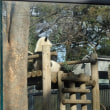 上野動物園(2018年2月12日)