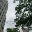 午前10:30 表参道は雨になりそうな…