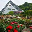 花の文化園にて・・・バラ・3