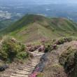 高千穂の峰に登りました。(ミヤマキリシマ満開♪)