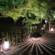 菜園 庭の手入れ京都の紅葉ライトアップの写真