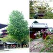 久方ぶりの法華経寺