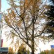 徳山の街路樹 (周南市)