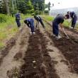 除草を楽にする方法