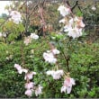 京都の旅二日目・・・最後の勧修寺
