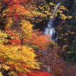 田沢湖・角館 抱返り渓谷紅葉祭り開催中です。