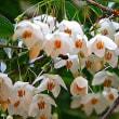 ポエム167 『エゴノキの花に見守られて』