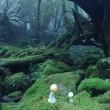神秘に満ちた屋久島