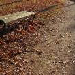 彩の森公園 晩秋