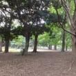 久喜市菖蒲公園