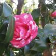 マッキーの『四季を楽しむ』:新宿御苑の春