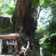 来宮神社の『大楠』と『起雲閣』