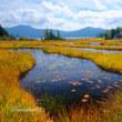 沼尻の草紅葉