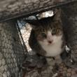 飼い主のいない猫さんの去勢手術3匹済ませました