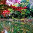 井の頭公園/ 紅葉が進んでいます。   2017-11-21