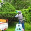 6月・7月は1年中で一番忙しい時期です。今日も庭の木の剪定に行ってます。