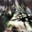 白駒の池 幻光 1