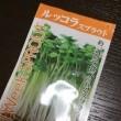 県下一の品揃え❣️希少品種の球根が揃う屋号【まちのはなやさん】Garden&アグリ事業❣️欲しいと思ったらご購入を🙇♀️