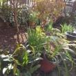 一昨日の庭仕事で、さっぱりした庭の景色