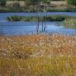 晩秋の芝川第一調節池