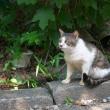 フーテンの猫だニャ。
