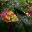 龍の住む池の小さな秋