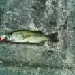釣りに行ってたぜ