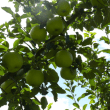 岩手県紫波町「義経手洗い井戸・義経神社」&リンゴ(林檎) 2017年9月15日(金)