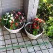 うちのお花達です