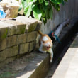 ネコから生まれるコミュニケーション @バリ島のネコたち(ペニダ島のネコ)