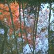 京の紅葉Ⅴ