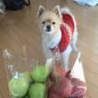 今年はリンゴを‥