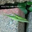 ♪‥注意書き【アチシの傘使うな〜!】