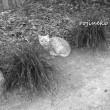 猫の森にいた妖精さん