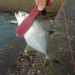 (2018.9.15)のルアー釣り『高知県東部~徳島県南のメッキアジ釣り』