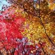 #^з^ 函館の秋~紅葉~ ΛоΛ*