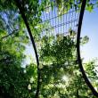 超広角10ミリレンズで撮った5月の赤塚植物園