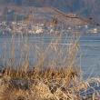 今日の諏訪湖