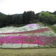 花の絨毯芝桜 ヤマサ蒲鉾